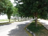 بلوار و درختان ابریشم هندی