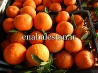 فروش نارنگی تانجلو