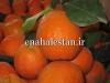 نارنج