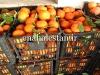 زیباترین رنگ در نارنگی تانجلو