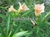 گل تی وی تی