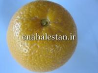 نارنگی پرل