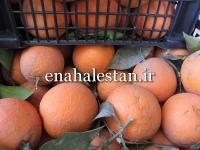 فروش پرتقال محلی دزفول